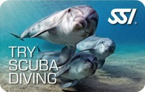 Try Scuba Diving o Bautismo de buceo