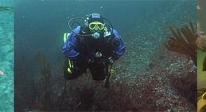 Curiosidades del buceo