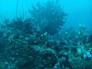 fotografía submarina de los restos del pecio Solway tomada por buceo malpica
